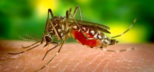 Interesting Facts About Mosquitoes That You Probably Didn't Know