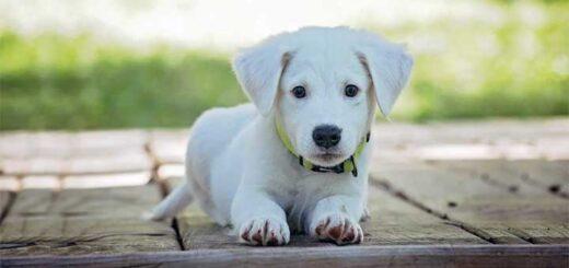 15 amazing facts about dogs in Hindi - कुत्तों के बारे में 15 आश्चर्यजनक तथ्य