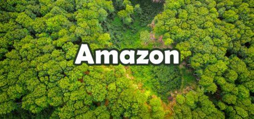 25 Fascinating Facts about the Amazon Rainforest अमेज़न जंगल (वर्षा वन) के बारे में 25 रोचक तथ्य