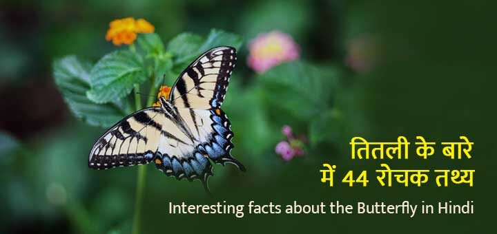 Interesting facts about the Butterfly in Hindi तितली के बारे में 44 रोचक तथ्य