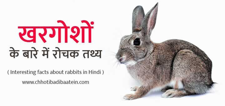 Interesting facts about rabbits in Hindi - खरगोशों के बारे में रोचक तथ्य